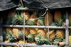Ananas w ciężarówce Obrazy Royalty Free