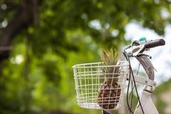 Ananas w roweru kosza zieleni zamazywał tła bokeh Zdjęcie Stock