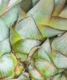 Ananasa pączek obraz royalty free