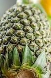 Ananasa strzał od dna zdjęcie stock
