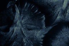 Ananasa zamknięty up błękit - tropikalnej owoc tekstura - Zdjęcia Stock