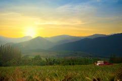 Ananasaanplanting op zonsondergangtijd. Stock Foto