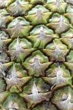 Ananasbakgrund arkivbilder