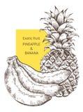 Ananasbananenfrucht Hand gezeichnete Vektorskizze Hintergrund, Tapete, Hintergrund, Muster Schablone für den Druck Lizenzfreie Stockfotos