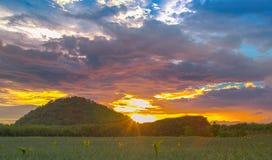 Ananasfeld mit Sonnenunterganglicht und -farben Stockbilder