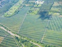Ananasfelder in den Philippinen stockbild