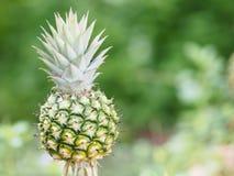 Ananasfrucht auf verwischt vom Naturhintergrundraum für schreiben Benennung lizenzfreies stockfoto