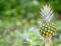 Ananasfrucht auf verwischt vom Naturhintergrundraum für schreiben Benennung lizenzfreie stockfotografie