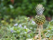 Ananasfrucht auf verwischt vom Naturhintergrundraum für schreiben Benennung lizenzfreies stockbild