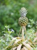 Ananasfrucht auf verwischt vom Naturhintergrundraum für schreiben Benennung lizenzfreie stockfotos