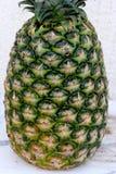 Ananasfrukt, Ananascomosus Fotografering för Bildbyråer