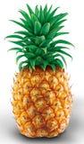 Ananasillustration, vitbaksida royaltyfri illustrationer