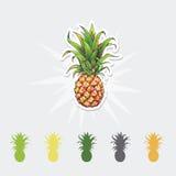 Ananasowa kolor ilustracja owocowy ustalony tropikalny Obrazy Royalty Free