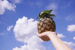 Ananasowa owoc na mężczyzna ręce Obraz Royalty Free