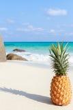Ananasowa owoc na piasku przeciw turkus wodzie Similan wyspy Tajlandia Tropikalny wakacje pojęcie Obraz Royalty Free