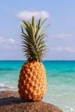 Ananasowa owoc na piasku przeciw turkus wodzie Similan wyspy Tajlandia Tropikalny wakacje pojęcie Fotografia Stock