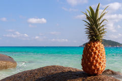 Ananasowa owoc na piasku przeciw turkus wodzie Similan wyspy Tajlandia Tropikalny wakacje pojęcie Zdjęcia Stock