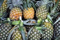 Ananasowa Tropikalna owoc Obrazy Stock