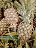 ananasowe świeże owoc Fotografia Stock