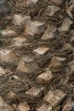 Ananasowy drzewny palmowy abstrakta wzoru tekstury tło Zdjęcia Stock