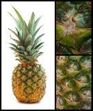 Ananasowy kolaż zdjęcie stock