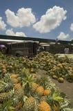 ananasowy morza Obrazy Royalty Free