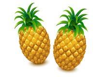 Ananasvector, ananas, ananas Stock Afbeeldingen