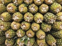 ananasy Ananas obrazy royalty free