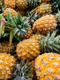 Ananasy dla sprzedaży Obrazy Royalty Free