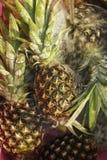 ananasy dojrzali Obraz Stock