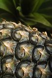 ananasy dojrzali Zdjęcie Royalty Free