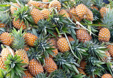 ananasy dojrzali Żniwo Obrazy Royalty Free