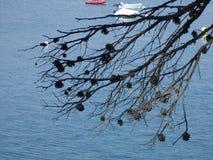 Ananasy suszący na błękitnym morzu obraz royalty free