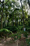 Ananthagiri Coffee Plantation Stock Image