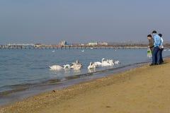 Anapa, Krasnodar Krai, Russie - 8 mars 2017 : Citoyens alimentés sur la plage et l'hivernage dans les oiseaux de la Mer Noire Image libre de droits
