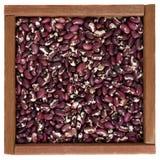 anasazibönor box purpurt vitt trä royaltyfria foton