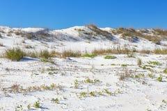 Anastasia State Park, la Florida imagen de archivo libre de regalías