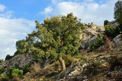 Anatolia scenery, Turkey. Beautiful landscape in Anatolia. Turkey. Lnely tree on a stony hillside in the mountains Royalty Free Stock Image