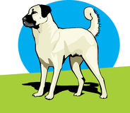 Anatolian Sheperd Dog color. A drawing of an anatolian Shepherd dog Stock Photos