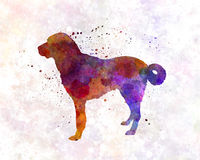 Anatolian Shepherd Dog in watercolor. Anatolian Shepherd Dog in artistic abstract  watercolor Stock Image
