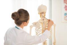 Anatomía de enseñanza de la mujer del doctor usando el esqueleto humano Fotografía de archivo