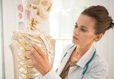 Anatomía de enseñanza de la mujer del médico Imagen de archivo libre de regalías