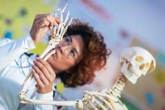 Anatomía de enseñanza del médico usando modelo esquelético humano imagen de archivo