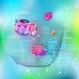 Anatomía de la célula Fotografía de archivo libre de regalías