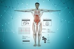 Anatomía del cuerpo humano Fotografía de archivo