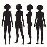 Anatomía del cuerpo humano Foto de archivo