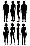 Anatomía del cuerpo humano, silueta del cuerpo ilustración del vector