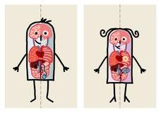 Anatomía del hombre y de la mujer Foto de archivo libre de regalías
