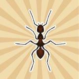 Anatomía del insecto Exsecta de la formica de la etiqueta engomada Bosquejo de la hormiga Ant Design para el libro de colorear ho Imágenes de archivo libres de regalías