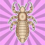 Anatomía del insecto Piojo humano principal de la etiqueta engomada Capitis del humanus del Pediculus Bosquejo del piojo diseño d Fotos de archivo libres de regalías